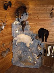 Click to view album: Trophy Rooms & Rock Walls
